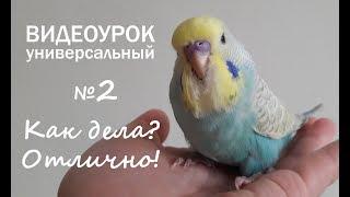 """🎶 Учим попугая говорить. Урок 2: """"Как дела? Отлично!"""""""