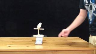 Weighing Parrots - Senegal Parrot and Budgie - Training Diet and Weight Management