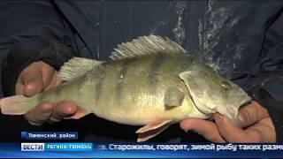 Костюмы для рыбалки зимние тюмень