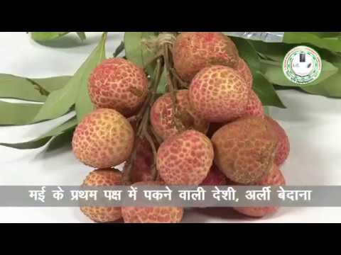 Litchi - Wholesale Price & Mandi Rate for Litchi