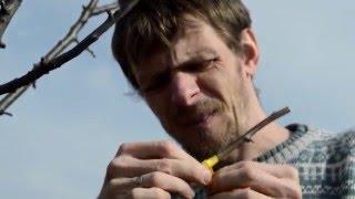 Прививка сливы: мастер-класс видео