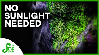 The Plants That Live on Artificial Light (and Why That's Bad)
