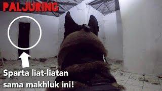 PALJURING - SPARTA KETEMU BANYAK MAKHLUK DI BUPERTA!