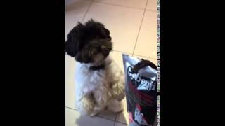 ByBenji Doggie Biltong – The Only Exciting NEW Dog Treat To Feed Your Dog