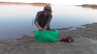 Рыбалка на зеи в благовещенске