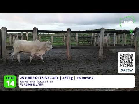 25 GARROTES NELORE - MACARANI-BA