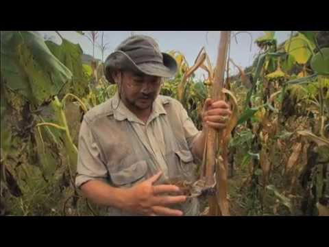 Green Gold  – Documentary by John D. Liu