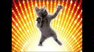 ТАНЦУЮТ ВСЕ!!!)  ЗДЕСЬ ЖАРКО! ТАНЦУЮЩИЕ ЖИВОТНЫЕ! DANCING ANIMALS!