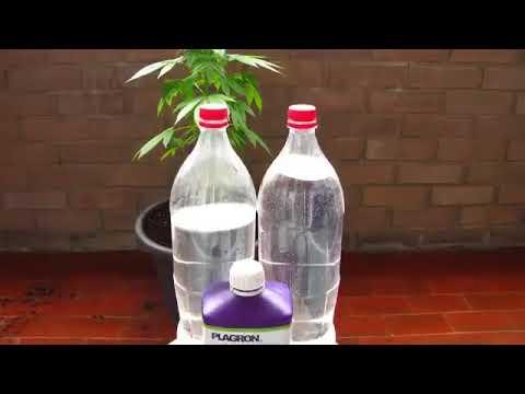 Come far crescere la Marijuana in 2 min -  dal seme alla pianta