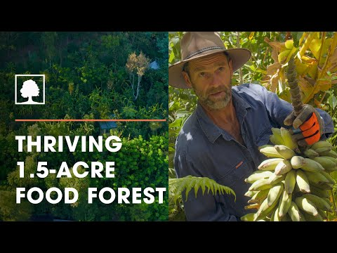 Food Forest Farmers: Syntropic farming to regenerate land
