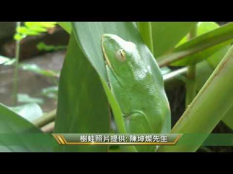 樹蛙、綠意、水生活 台北市信義區象山公園簡介(3min)