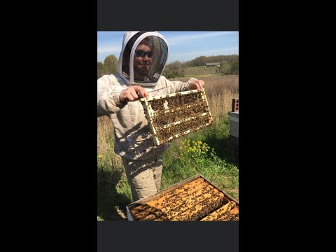 , title : 'A discussion on treatment free beekeeping between Cory Stevens and Troy Hall.