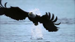 Fly Like An Eagle Steve Miller Band Music Video Lyrics HD Video