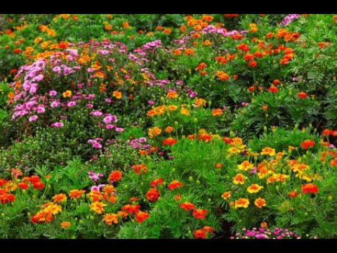 , title : 'Beautiful Flowers || Flowers Exhibition || Beautiful Flowers Video ||  Beautiful Flowers Garden