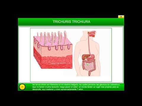 การรักษาผู้ใหญ่ nemozol ของเวิร์ม