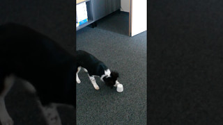 """Der """"Tassenhund"""" - die erste"""