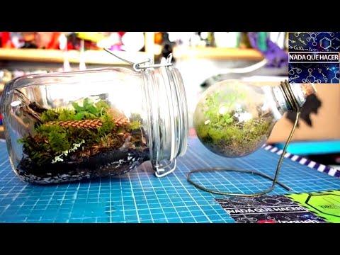 Cómo hacer un terrario eterno en un frasco y ¿como va el foco? NQUEH
