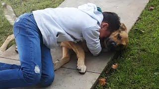 INCREIBLES Mascotas Perdidas Que Regresaron A Casa!