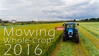 Kennedys Dairy Farm - Mowing Whole-Crop - 4K