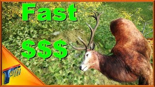 How to Earn Fast Cash in COTW | theHunter: Call of the Wild 2017