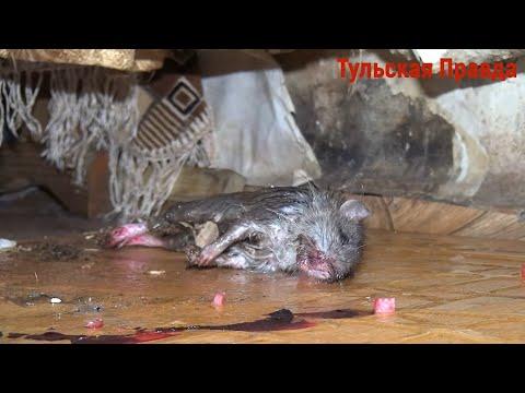 Детей в аварийном узловском бараке покусали крысы