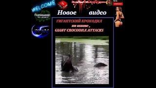 ГИГАНТСКИЙ КРОКОДИЛ на охоте ,GIANT CROCODILE ATTACKS
