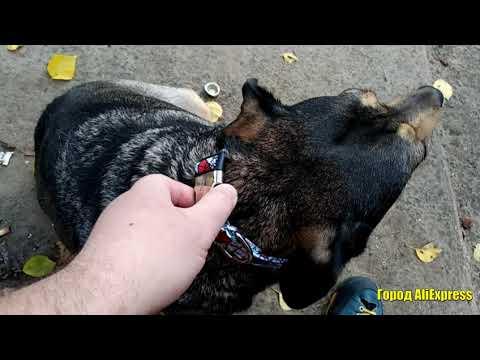 Красивый ошейник для собак с гравировкой номера телефона