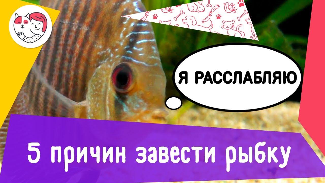 5 причин завести аквариумных рыбок