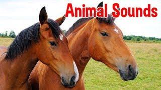 Animal Sounds for Children (20 Amazing Animals)