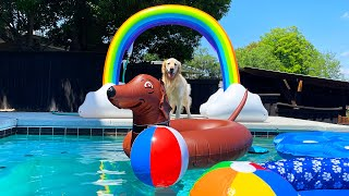 FIRST DOG POOL PARTY OF 2021!