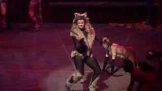 The Rum Tum Tugger - Cats