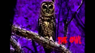 Angry Johnny And The Killbillies-The Owl