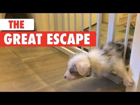 Mascotas Escapando De Manera Divertida