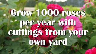 Grow Roses From Cuttings: Semi-hardwood