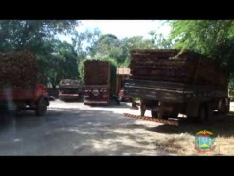 AL Notícias | Extrema pobreza - Madeiras apreendidas - Captação de água da chuva