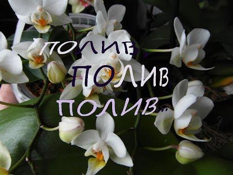Полив, полив, полив...ещё раз о поливе моих орхидей.
