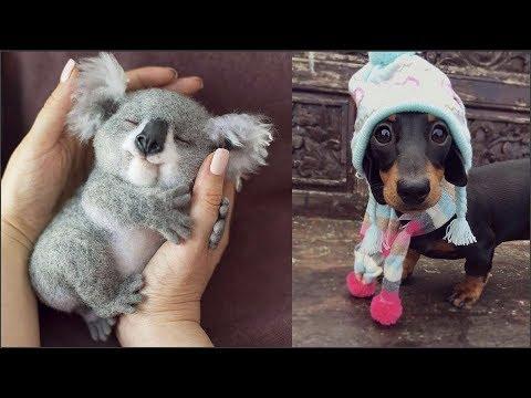 Cuccioli in difficoltà