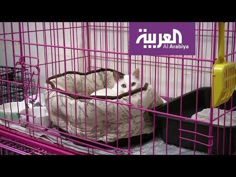 العرب اليوم - شاهد: هل الحيوانات الأليفة بمنأى عن فيروس