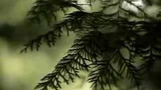 """Video thumbnail of """"Le gars d'la compagnie"""""""