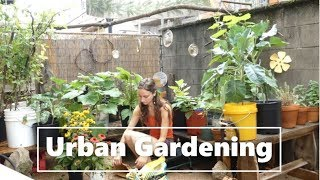 Urban Gardening | A Backyard Container Garden