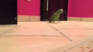 Bird Laughs Like Super-Villain