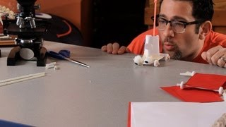 How to Make a Car Out of Paper & Candies | Science Projects