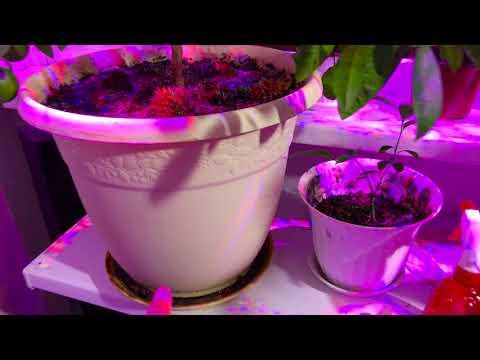 """Цитрусовые растения   """"Калиевая селитра"""""""