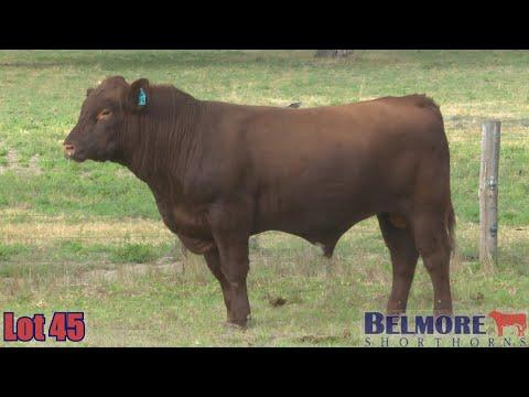 BELMORE FORTRESS Q156