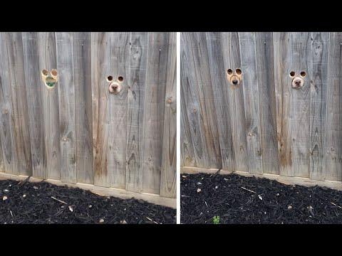 Το καλωσόρισμα των σκύλων μέσω από τον φράχτη