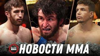 Бразилец хочет бой против Забита Магомедшарипова, Двойной хаммерфист, Гонорары UFC в Бразилии