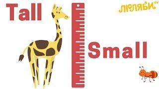 Обучающая песенка   Английский для малышей   Tall-Small (Высокий-Маленький)  Метод Домана