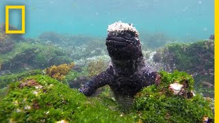 Dive Into the Wildlife-Rich Waters of the Galápagos   National Geographic