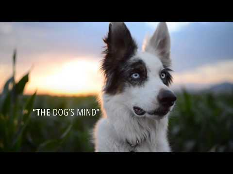 The Dog's Mind SEMINAR - YouTube