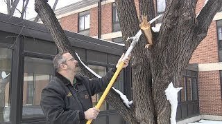 Winter is A Great Time to Prune Trees
